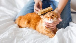 enfermedades en los gatos
