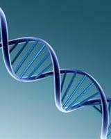 genetica pubertad