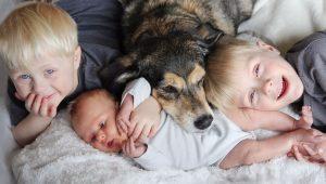 ¿Cómo preparar al perro para que conviva con un bebé?
