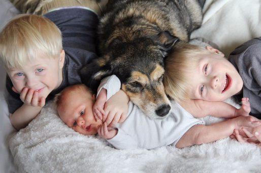 preparar al perro para que conviva con un bebé