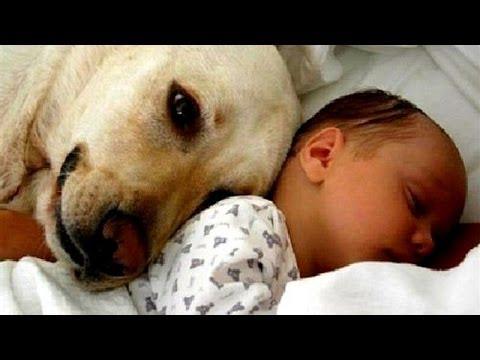 Video Mascotas Conociendo Por Primera Vez A Beb 233 S