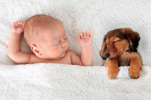 Enfermedades de las mascotas que afectan al bebé