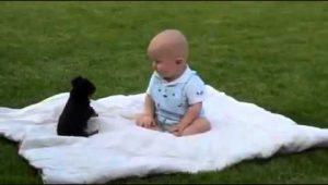 Lucha de ternura entre este bebé y su perro