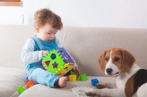 Terapias con perros para niños con discapacidad