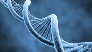 Abuela materna: importante en la herencia genética