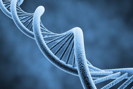 importante en la herencia genética