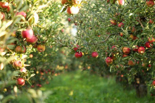 Frutas del bosque para los niños
